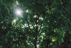 treesw