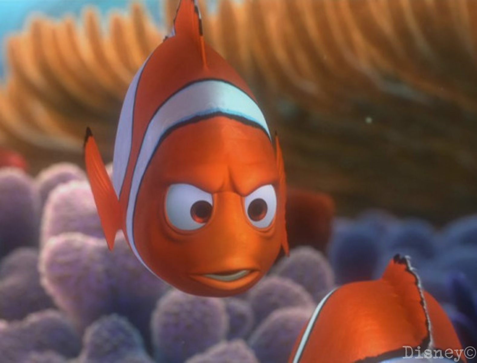 5 Parallels Between Nemo And Dory